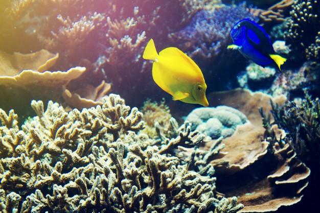 Tipos de pescados según su hábitat